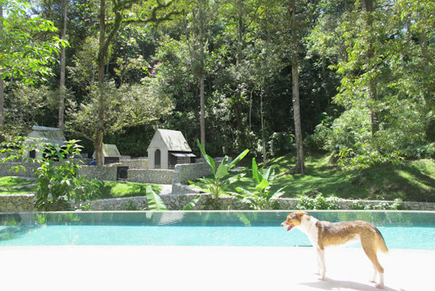 Luxury-Dog-Hotel-Accommodations-in-Malaysia-4
