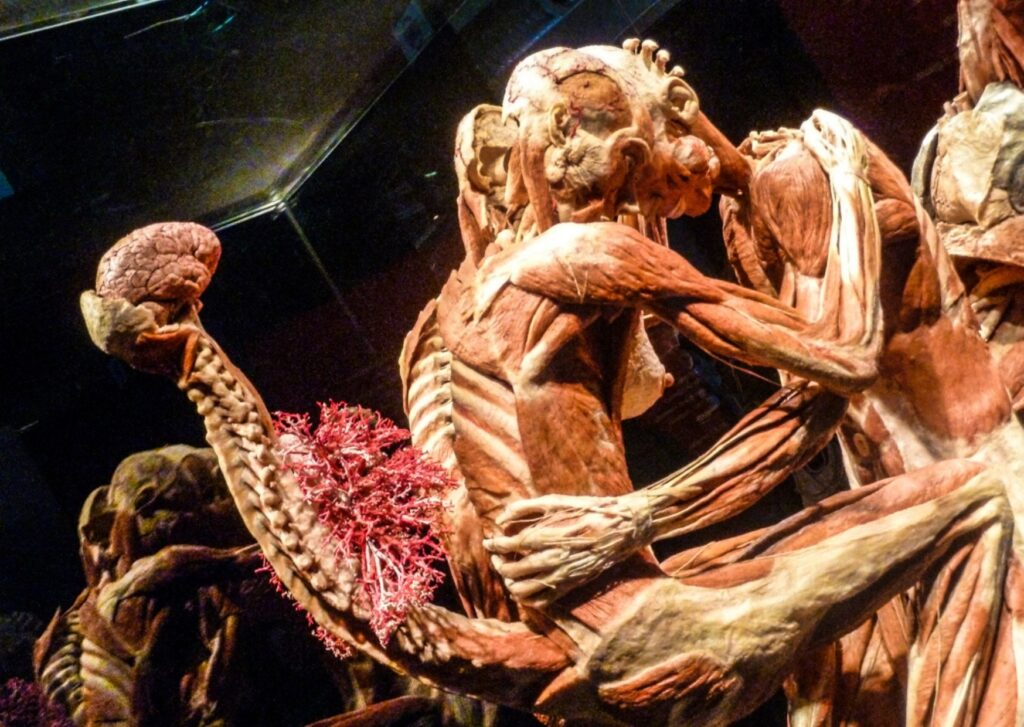 Body Worlds»: Η έκθεση – φαινόμενο με τα αληθινά σώματα έρχεται στην Αθήνα  – THE PAPER